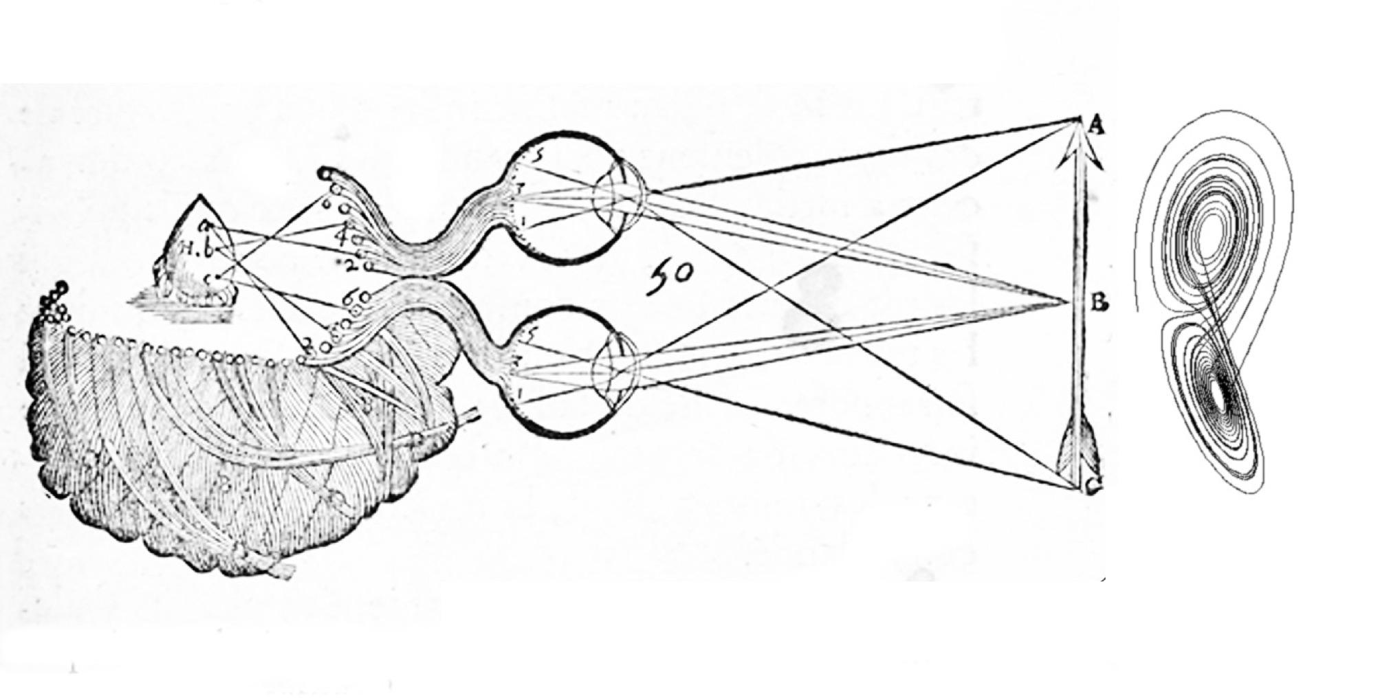 esteoscopía copy